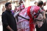 Image gallery of Pakistan's Shias celebrate Ashura  .
