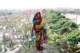 Life under the shadow of climate change in Bangladesh