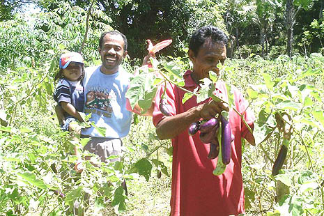 Farmers in Welama village growing eggplants
