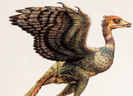 An illustration of an archaeopteryx from a Korean science textbook