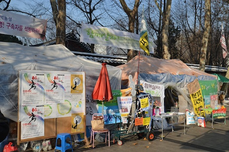 The tents of the 'Live Together' protesters in downtown Seoul