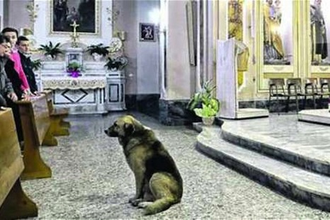 The dog who goes every day to his dead owner's church