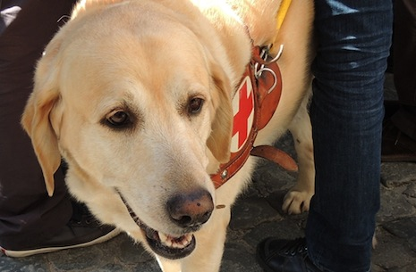 Pope breaks with tradition to bless a guide dog