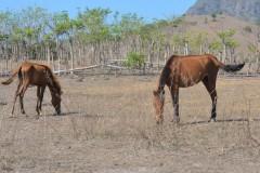 Indonesian farmers in limbo as drought kills livestock