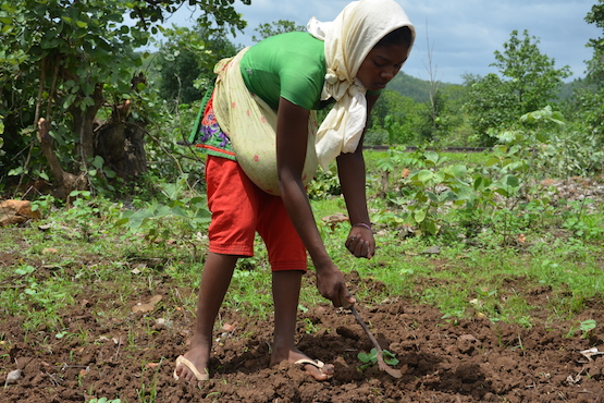 Caritas India welcomes government's pro-farmer policy