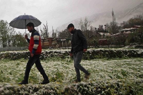 Bad weather kills Kashmiri farmers' hope of recovery