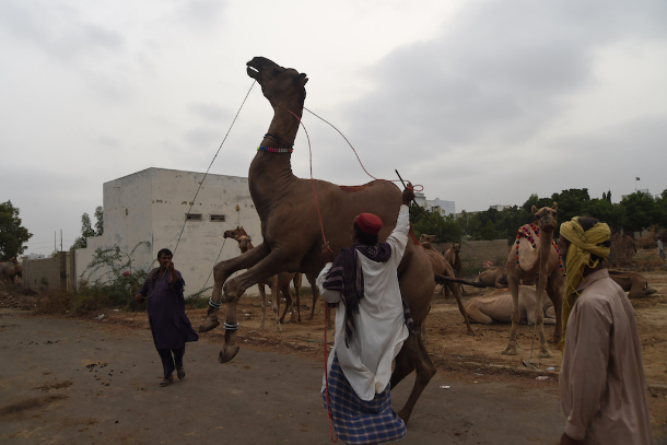 Hindus object to Eid animal slaughter in India