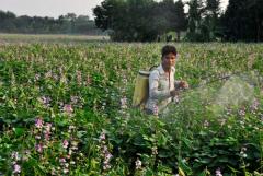 Unsafe food leaves nasty taste in Bangladesh