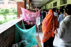 Hospitals struggle as Bangladesh battles dengue