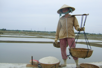 Good harvests but meager income for Vietnam salt farmers