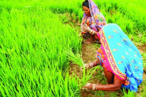 Indian archbishop wants action over rotten rice grains