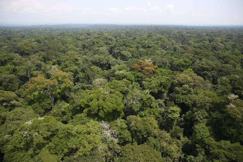 Congolese bishops focus on protecting Congo Basin