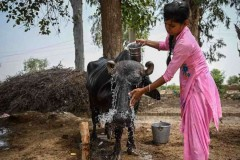 India's poor can't afford to beat the heat